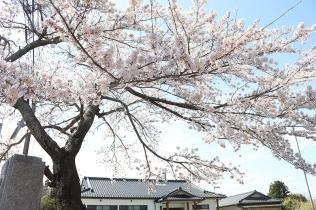 郡山正八幡神社